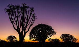 Zonsopkomst kokerbomen van Robert Riewald