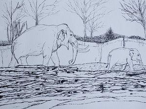Wandelende Olifanten von