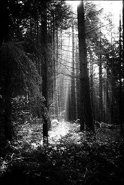Bomen  von Studio  Milaan