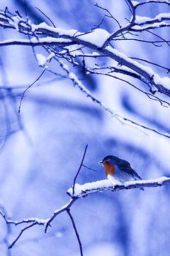 Winter 2 sur Eugene Klinkenberg