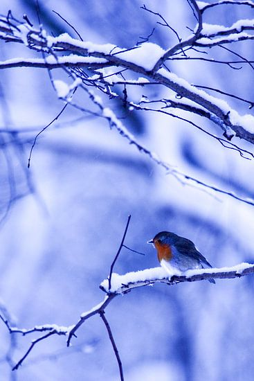 Winter 2 van Eugene Klinkenberg