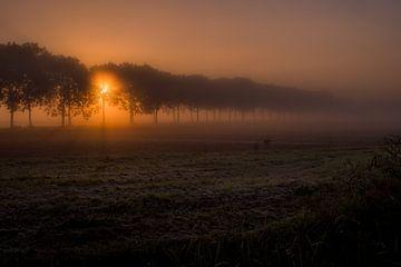 Ochtendzon in bomenlaan van Moetwil en van Dijk - Fotografie