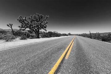 Park Boulevard, Joshua Tree National Park sur Melanie Viola