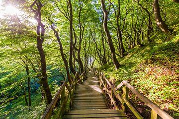Een pad door het bos op het eiland Møn in Denemarken van