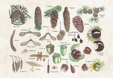 Nüsse und Samen von Jasper de Ruiter