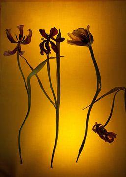Vier Blootgestelde Tulpen van Susan Hol