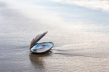 Schelpje op het strand van Irene Damminga