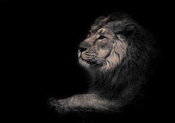 bête lunaire (cendrée). Vue de profil calme et confiante. Un lion mâle puissant à la crinière chic s sur Michael Semenov