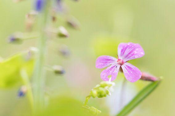 Bloempjes in het bos van Jacqueline de Groot