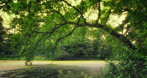 Green Forrest van