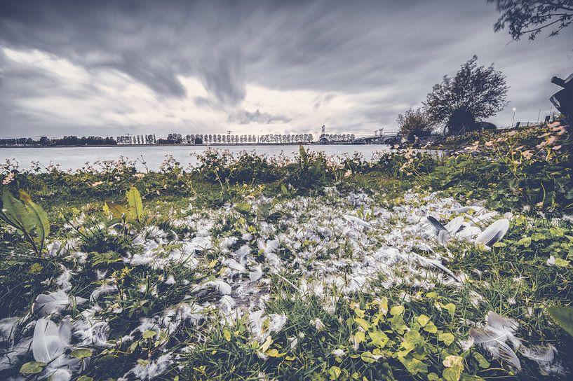 Plukplaats van een roofdier langs het water van Fotografiecor .nl