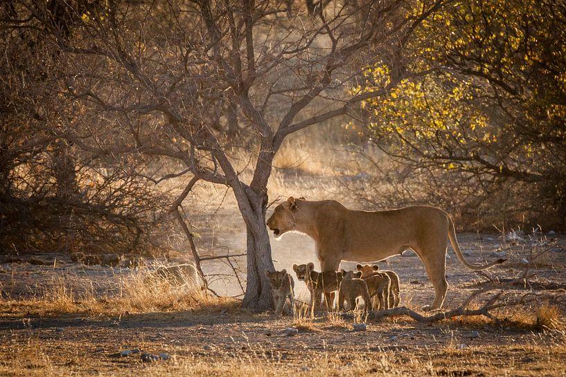 Leeuwin met welpen in Namibië van Simone Janssen