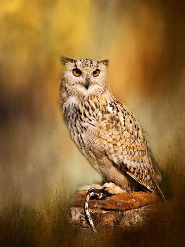 Great Horned Owl Wall Art von Diana van Tankeren