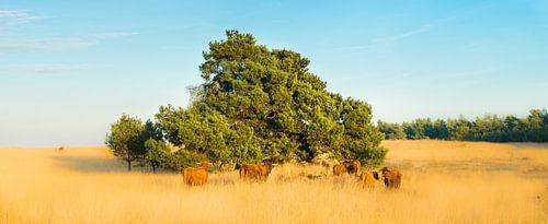 Roozendaalsche veld wildlife van