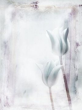 deux tulipes sur Claudia Gründler