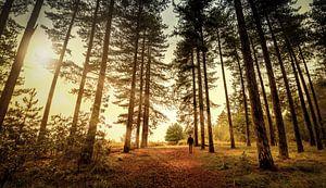 alleen in het bos