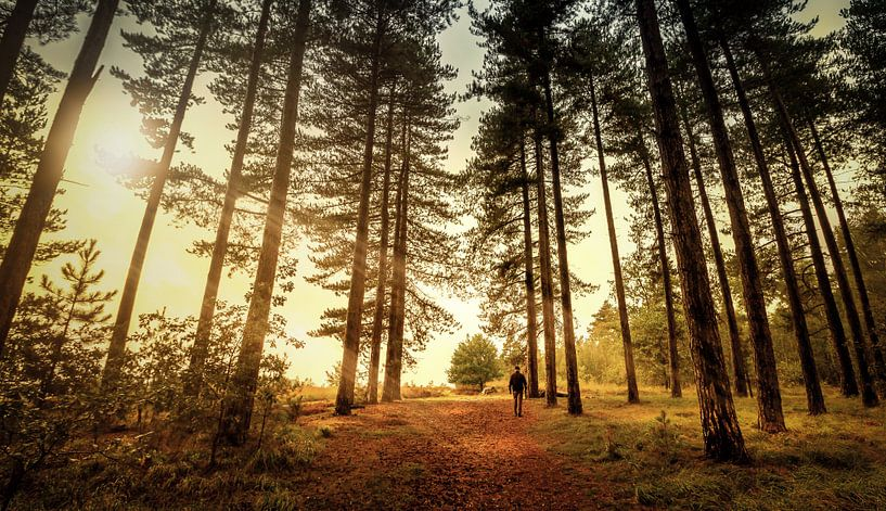 alleen in het bos van Johan Strijckers