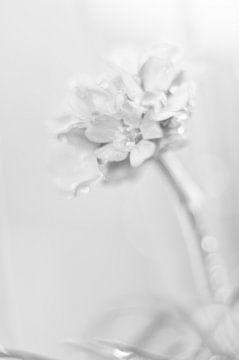 Zacht zwart wit von Minie Drost