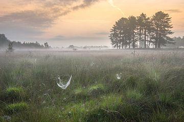Morgennebel von Roelie Steinmann