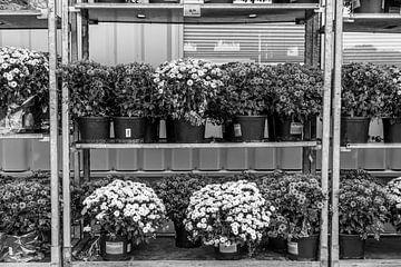 Blumenverkauf van Rolf Pötsch