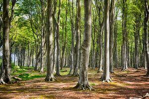 Der Gespensterwald von Nienhagen