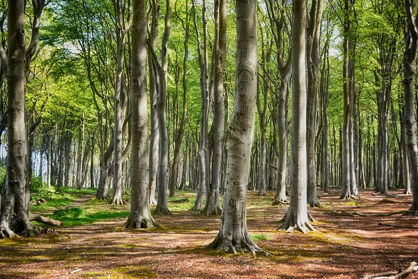 Der Gespensterwald von Nienhagen von Joachim G. Pinkawa