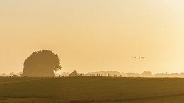 Ein nebliger Morgen im Dollard von Groningen von Karin Bijpost