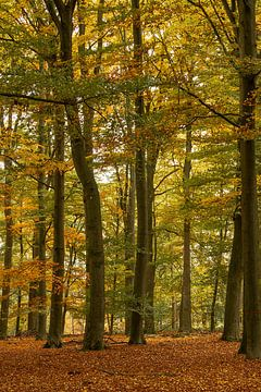 Herbst im Wald von Klaas Doting