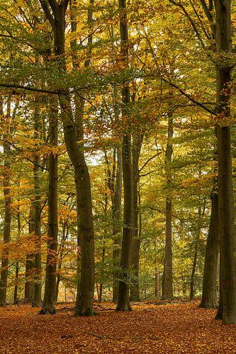Herfst in het Bos van Klaas Doting