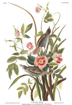 Bord de mer Finch