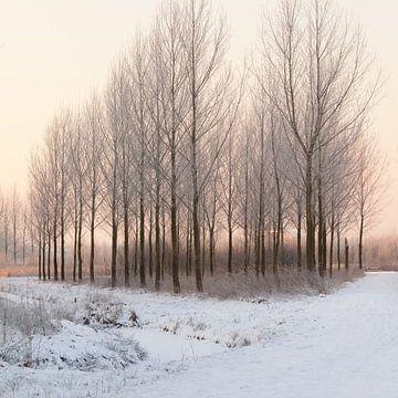 Populierenbosje in de winter von Marijke van Eijkeren