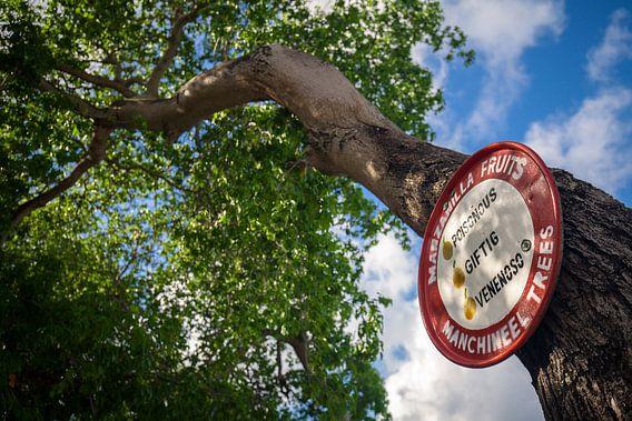 Manzanillaboom van Martijn Smeets