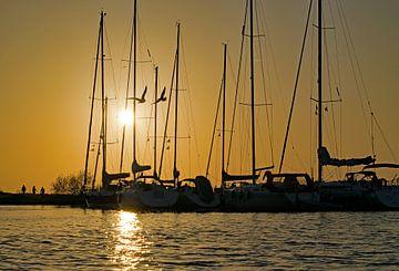 Zeilboten en meeuwen bij zonsondergang op het Grevelingenmeer van Judith Cool