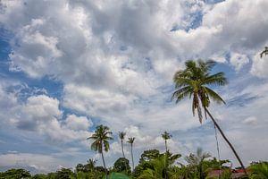 palmbomen steken af tegen de blauwe lucht