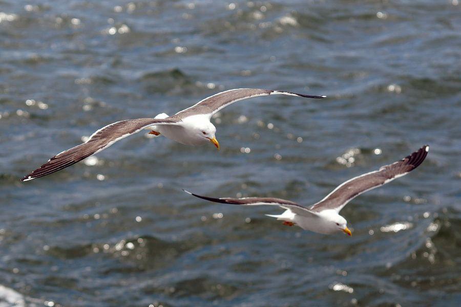 meeuwen boven zee van Dirk van Egmond