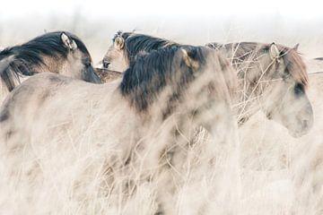 Konikpaarden in Oostvaardersplassen van Kimberley Jekel