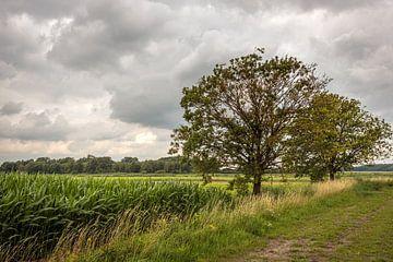 Nederlands polderlandschap met bomen en een zwaarbewolkte hemel van Ruud Morijn