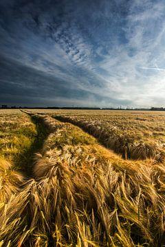 Golden Field van Harold van den Berge