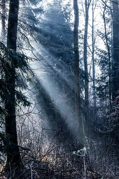 Misty morning van Emma Jansen