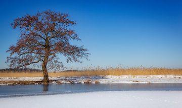 Boom in winterlandschap van Thijs Friederich