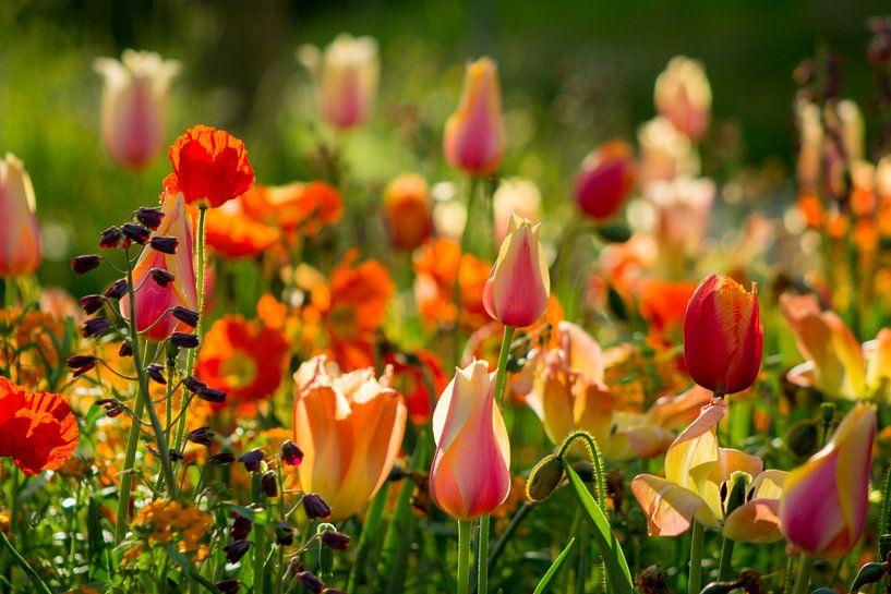 Kunterbunte Blumen von Renate Dohr