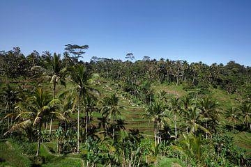 Tegallalang, Ubud, Bali. Die dramatischsten und spektakulärsten Reisterrassen in Bali von Tjeerd Kruse