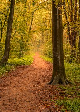 Het bos in van Patrick Herzberg