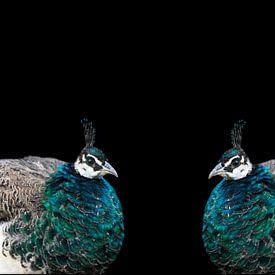 Pauw dubbelportret van Ina Hölzel