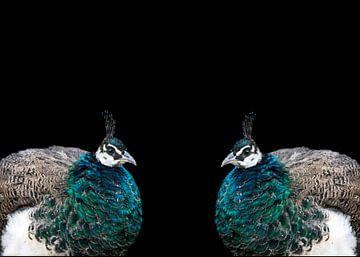 Pauw dubbelportret van