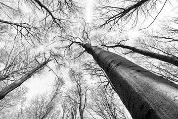 Schauen Sie in den Wald hinauf. von Leontine van der Stouw