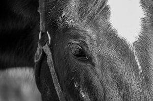 Pferd auf Ameland von Willem Holle WHOriginal Fotografie