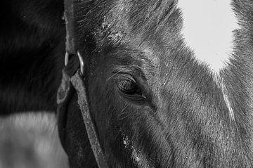 Paard op Ameland van Willem Holle WHOriginal Fotografie