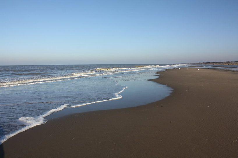 Strand van Ronald Boon