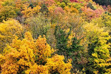 De toppen van de bomen von Petra Brouwer